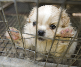 TN Puppy Mill Rescue