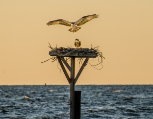Photo: Chesapeake Bay Foundation