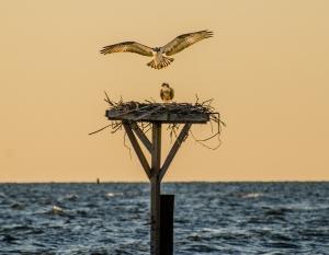 Photo: Chesapeake Bay Foundation