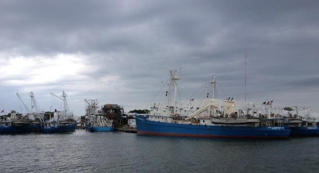 omega ships