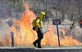 controlled_burn_too